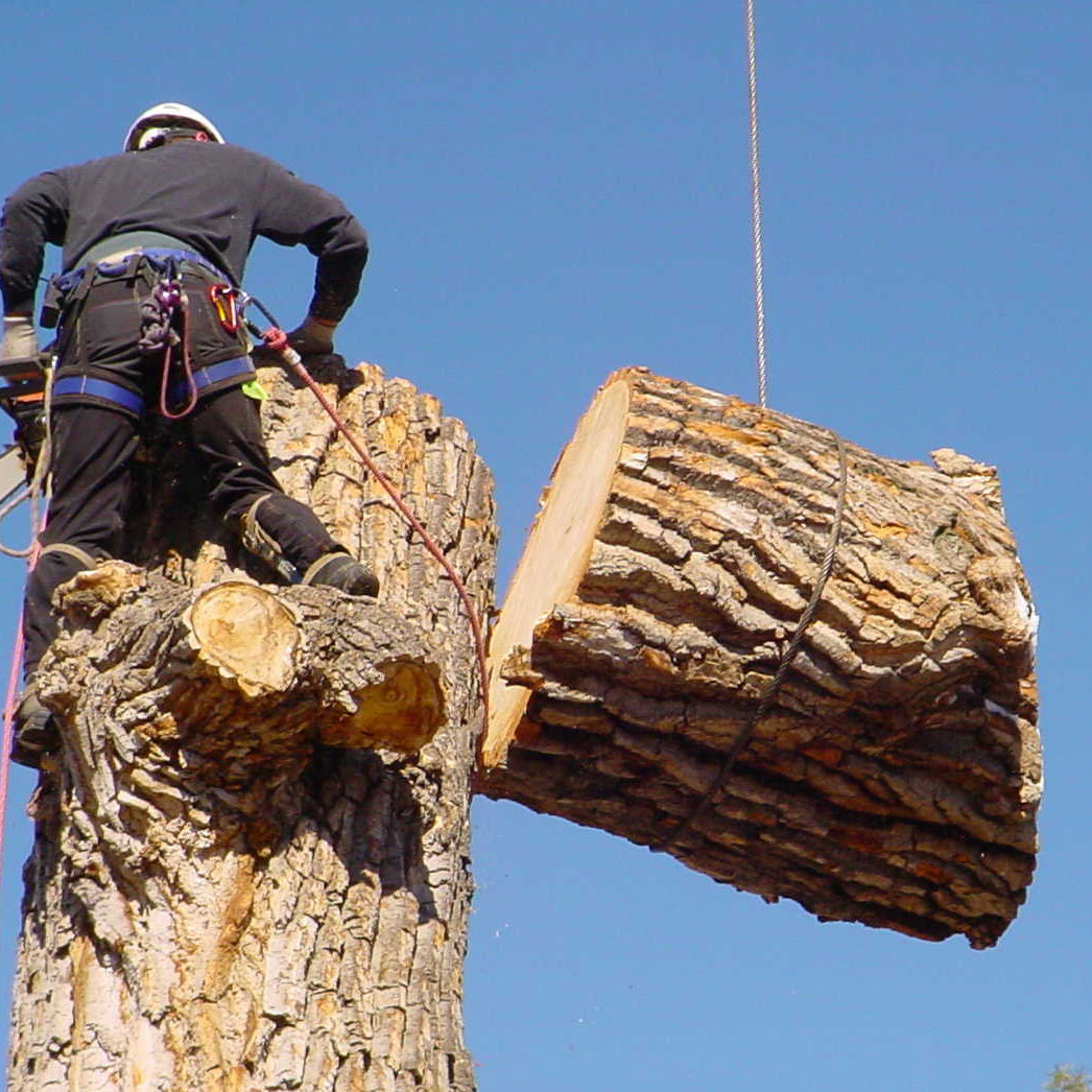Tree_Removal1